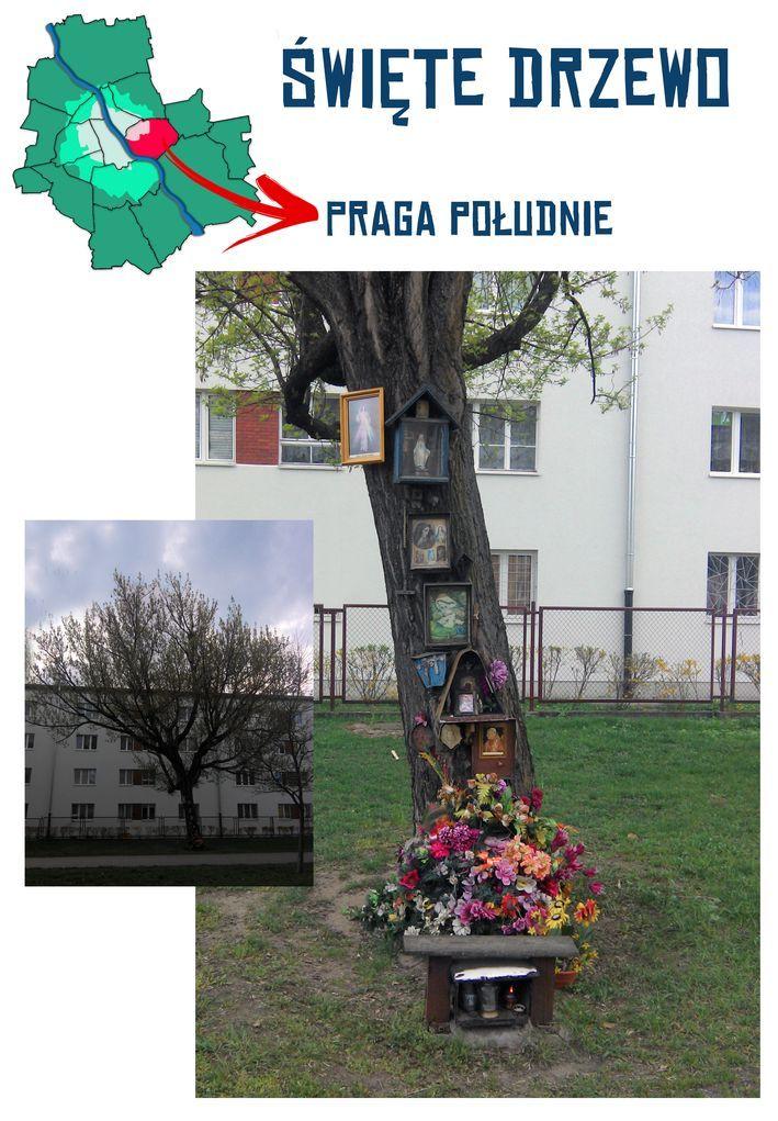 praga poludnie_swiete drzewo