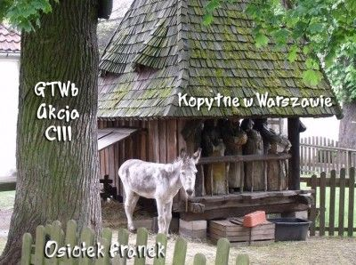 GTWb – Akcja CIII – Kopytne w Warszawie