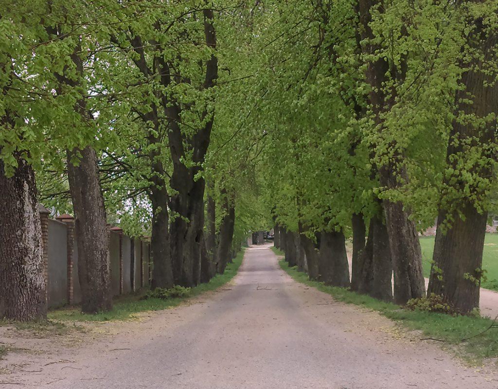 Droga między drzewami w Sokółce